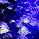 New Orleans - Look Downs at Audobon Aquarium by ACImaging