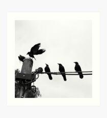 Pecking Order Art Print