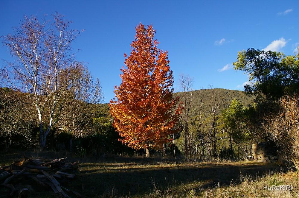 Autumn by HaRaKiRi