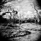 The Faraway Holga by Rhys Allen