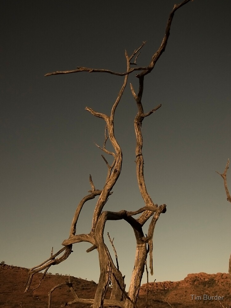 Dead Tree by Tim Burder