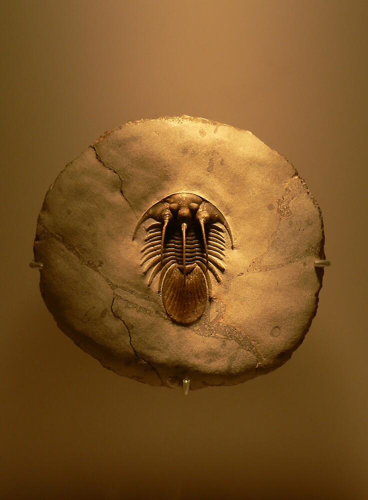 trillobyte  fossil by wyvex