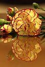 Carnation 2 by John Velocci