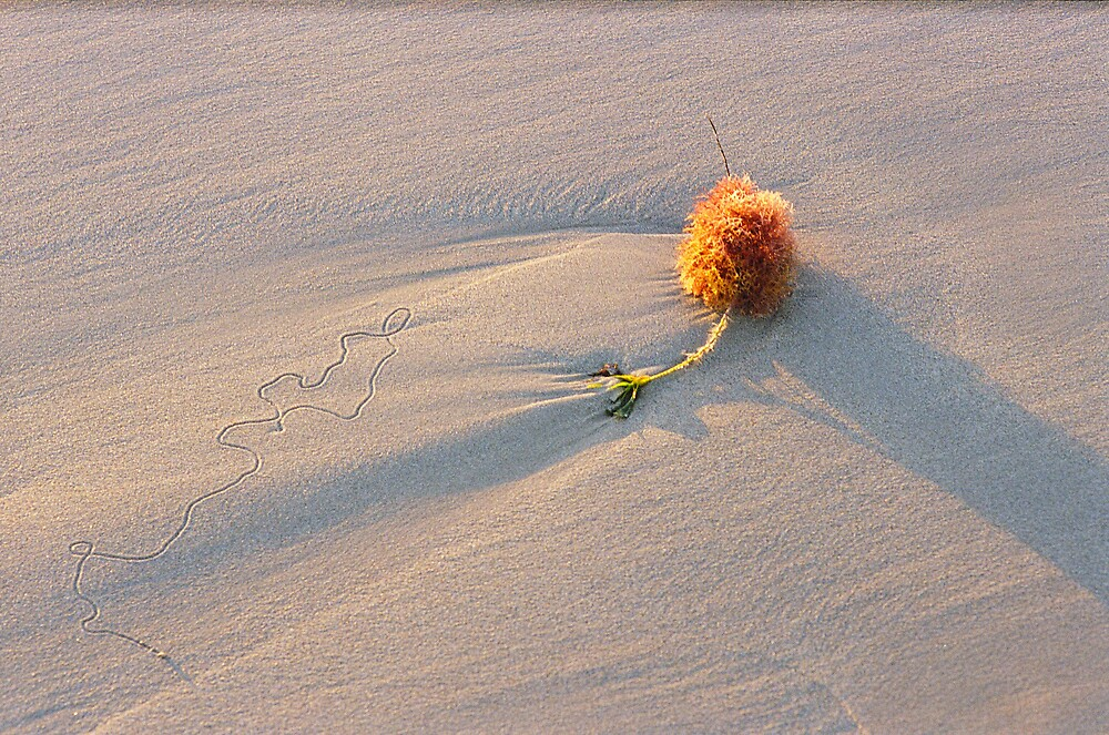 Seaweed Detail at Sunset by mgimagery