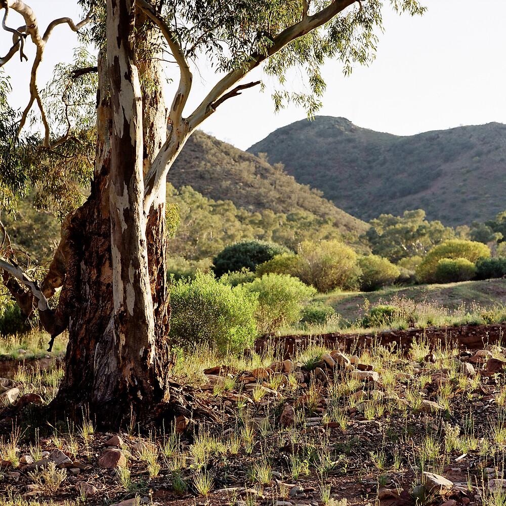 untitled, Flinders Ranges by mgimagery