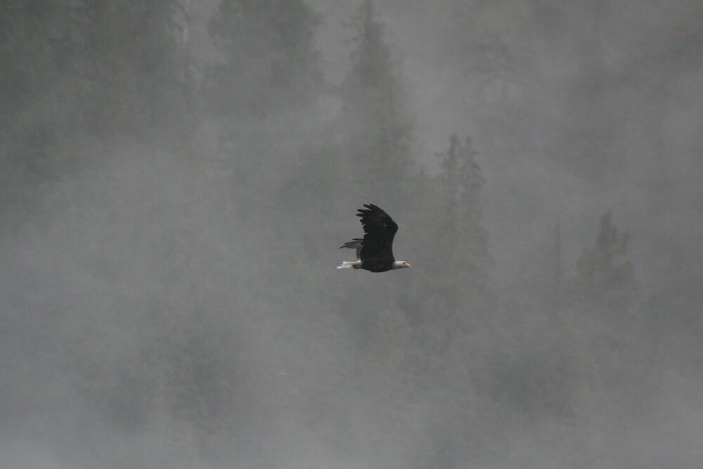 Flight by John Clarke
