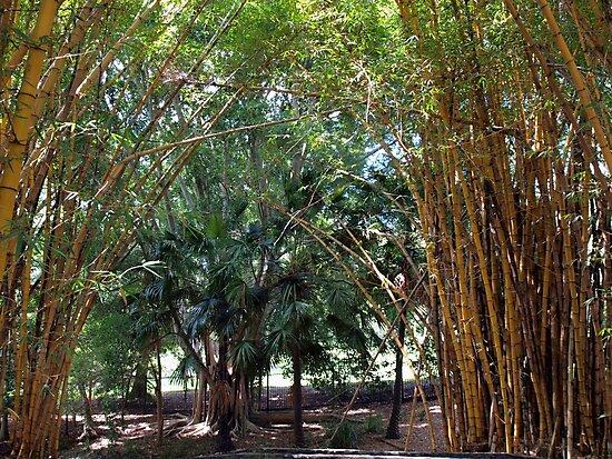 Bamboo Grove by W E NIXON  PHOTOGRAPHY