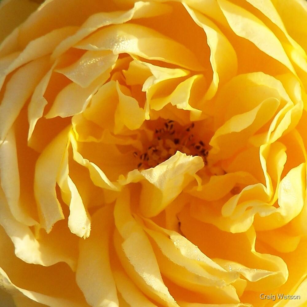 Mellow Yellow by Craig Watson