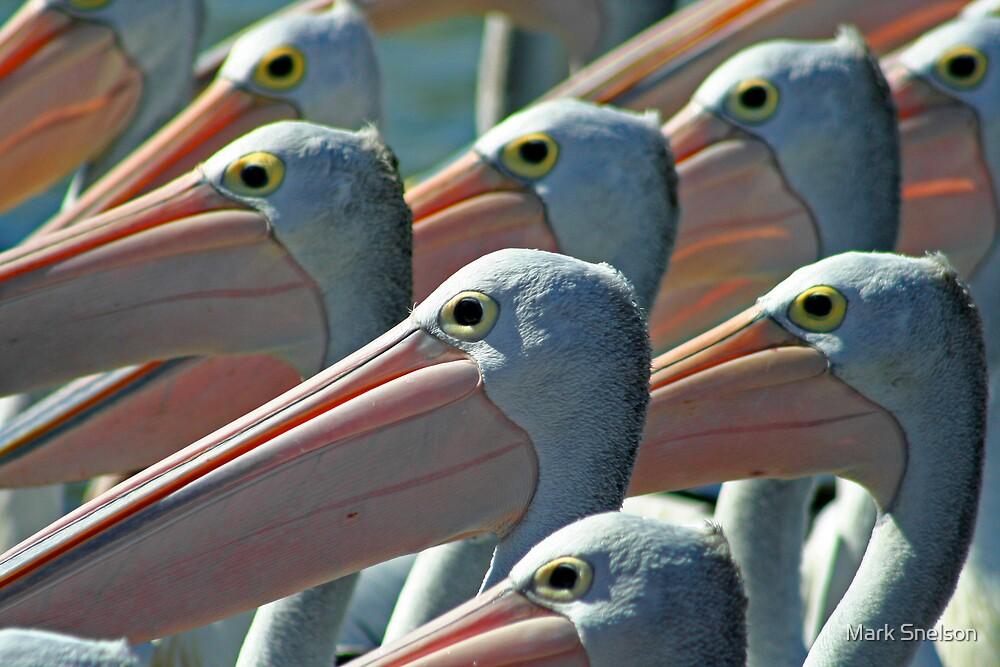 Pelicans 1 by Mark Snelson