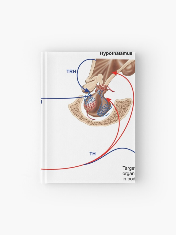 Relation Of Thyroid And Pituitary Gland Hardcover Journal By