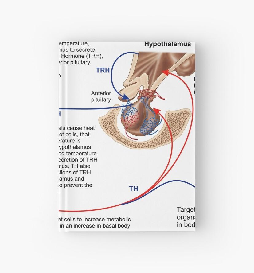 Cuadernos de tapa dura «Relación de la tiroides y la glándula ...