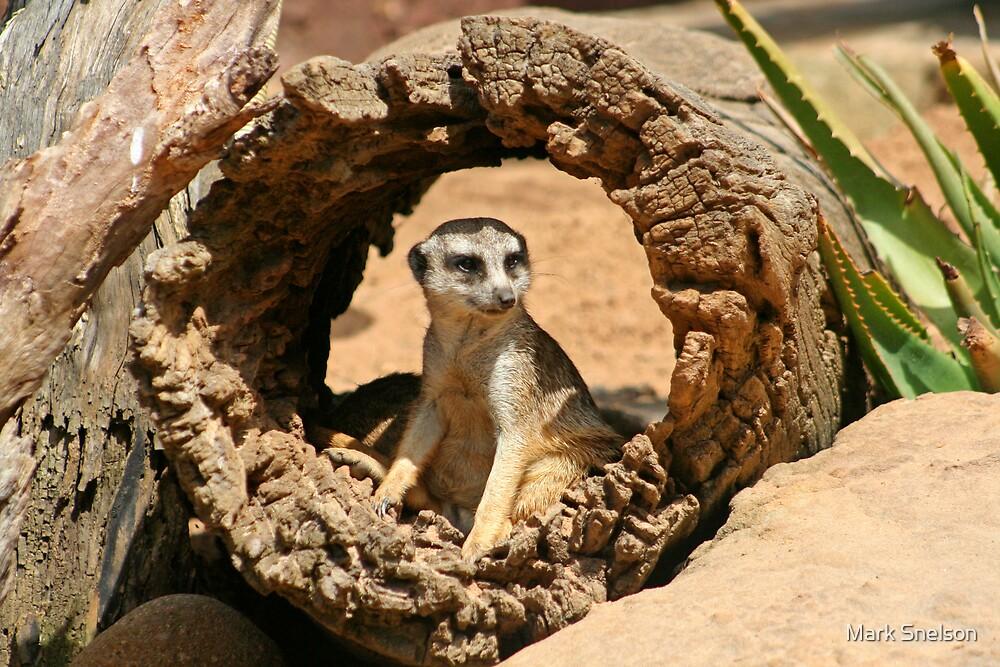 Meerkat 1 by Mark Snelson