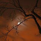 Midnight Tree by Jason Ross