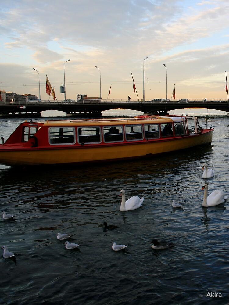 Swans on the Rhône by Akira