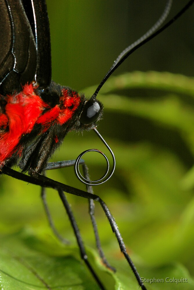 Tropical Butterfly Macro by Stephen Colquitt