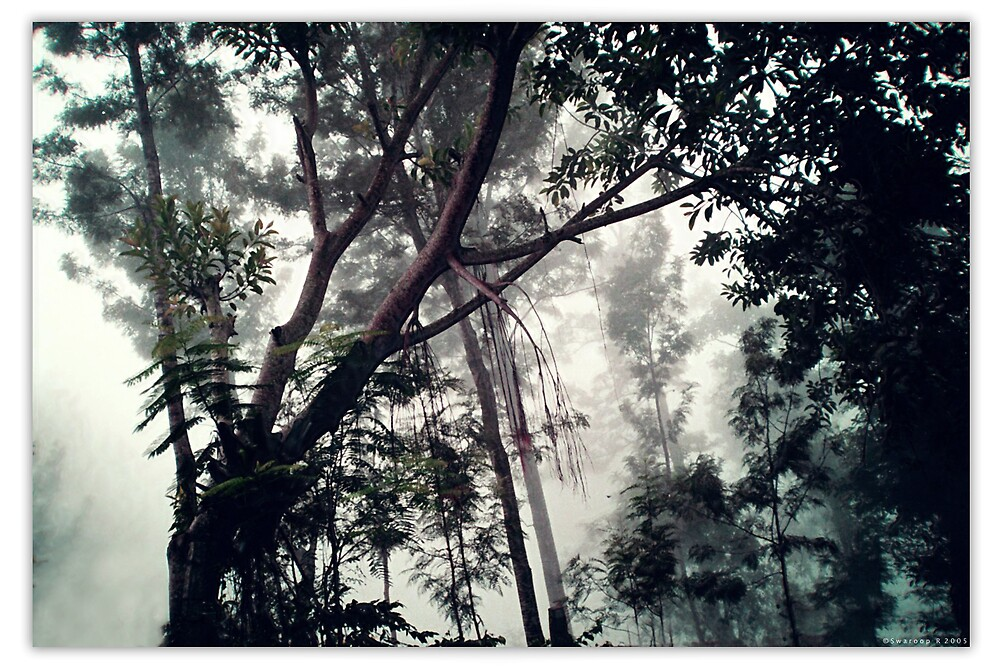 Ah the mist by Swaroop R