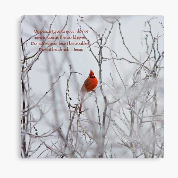 Let not your heart be troubled - Winter Cardinal Metal Print