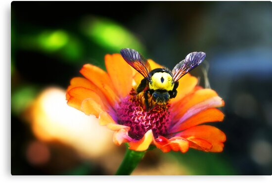 The Bumble Bee by nomes