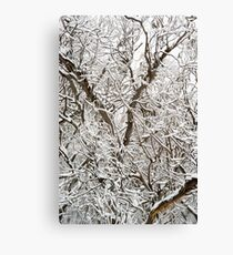 Spindly Snow Gums under fresh snow Canvas Print