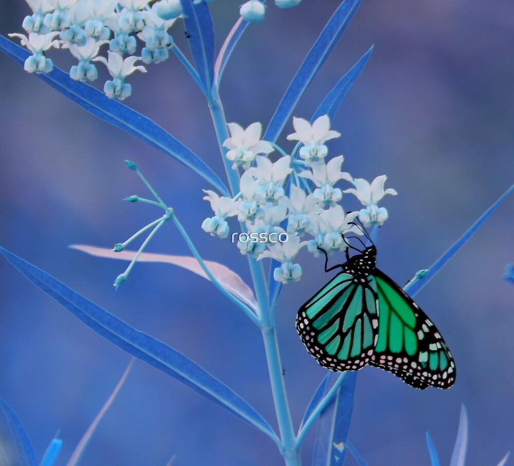 Feeling Blue by rossco