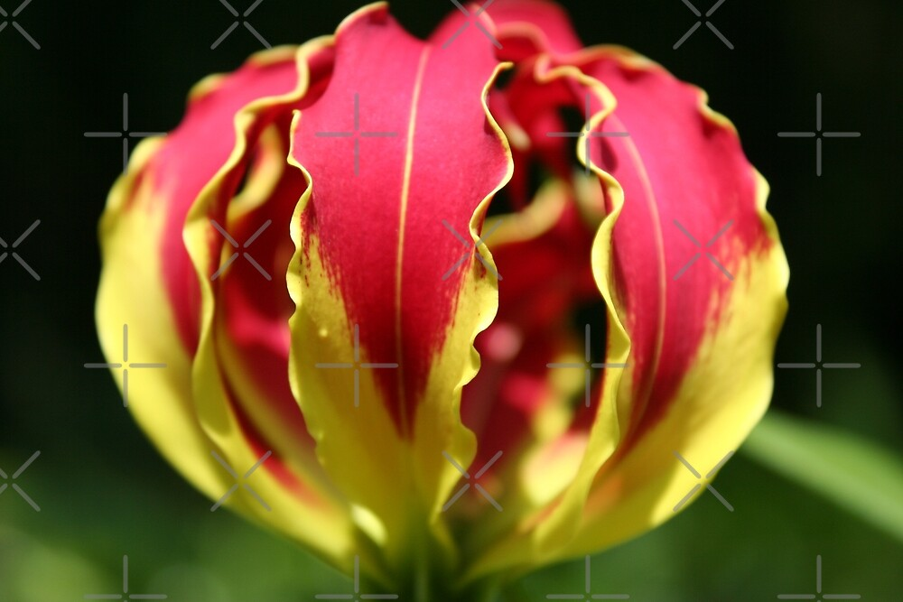 Quot Flame Lily Fist Quot By Jocelyn Hyers Redbubble