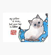 Lámina fotográfica Kitten on Pillow
