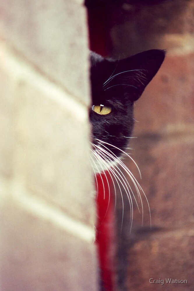 Closeup of a cat's eye by Craig Watson
