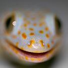 Gekko's Smile by James Deverich