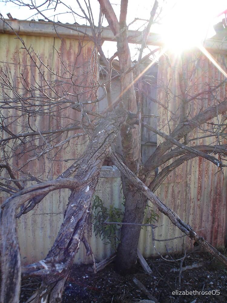 old tree by elizabethrose05