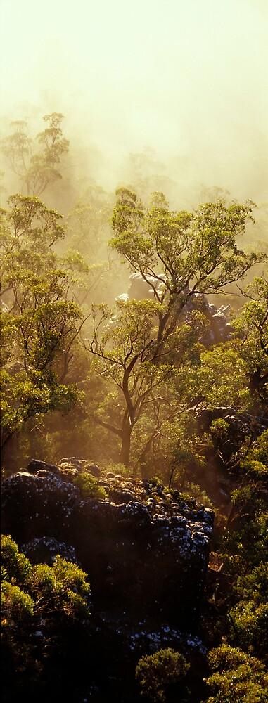 Tree is Mist - Grampians - Victoria by James Pierce