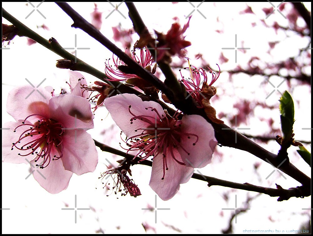 signs of spring by webgrrl