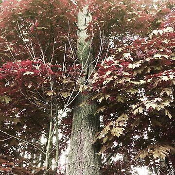 Leafy Tree by zhirobas