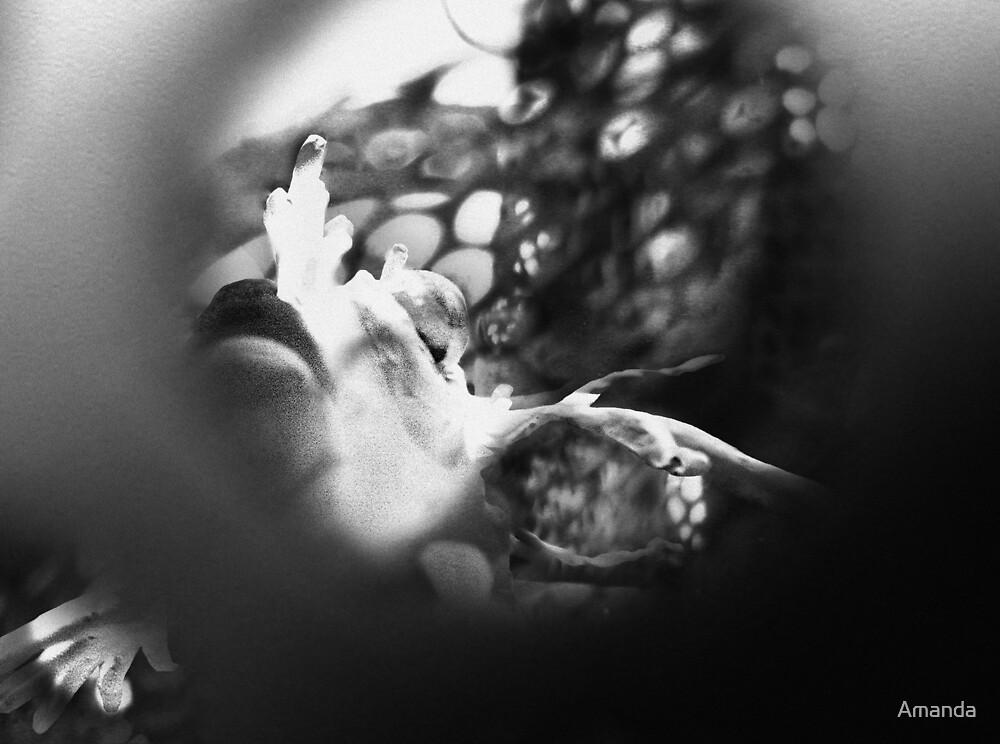 A John West Reject by Amanda J Slack-Smith