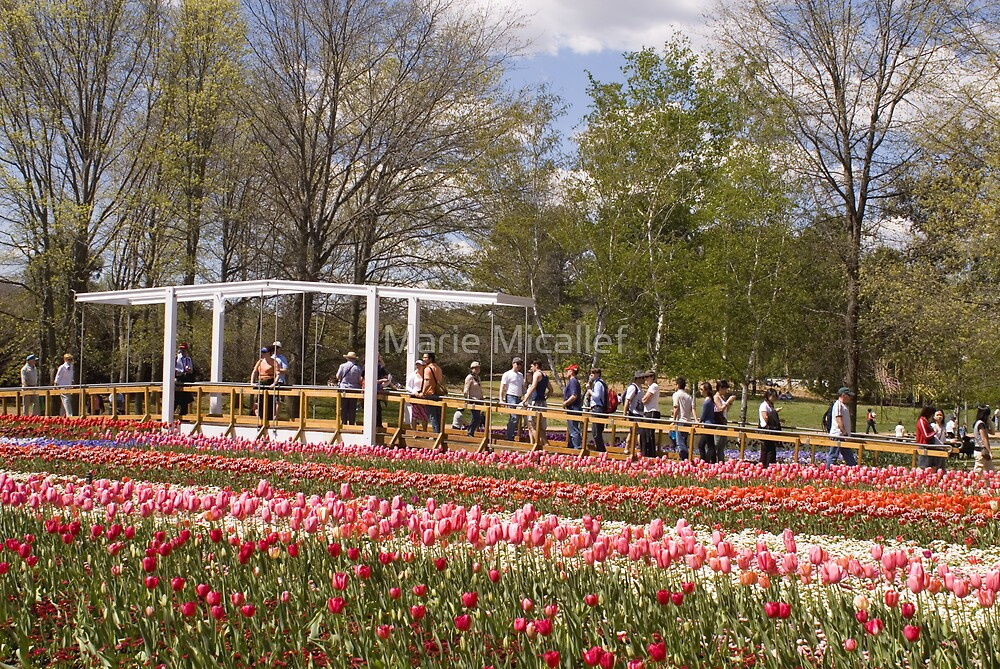 People and Flowers by Shutterbug