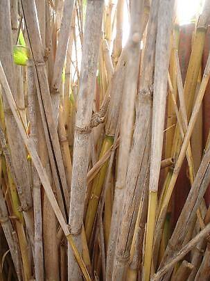 bamboo by elizabethrose05