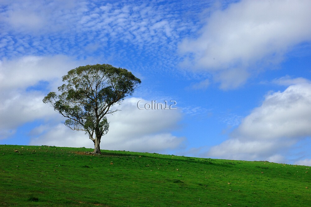 Lone Tree by Colin12