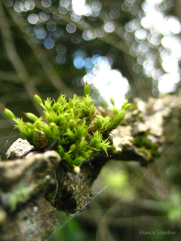 little moss by marbia