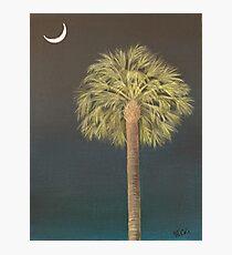 Palmetto Moonlight Photographic Print