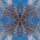 Blossom Burst #3 by John Hill-Daniel