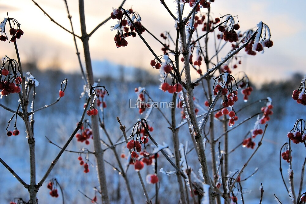 Red Berries in Winter by Lindamell