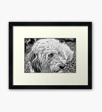 Griffon Dog Framed Print