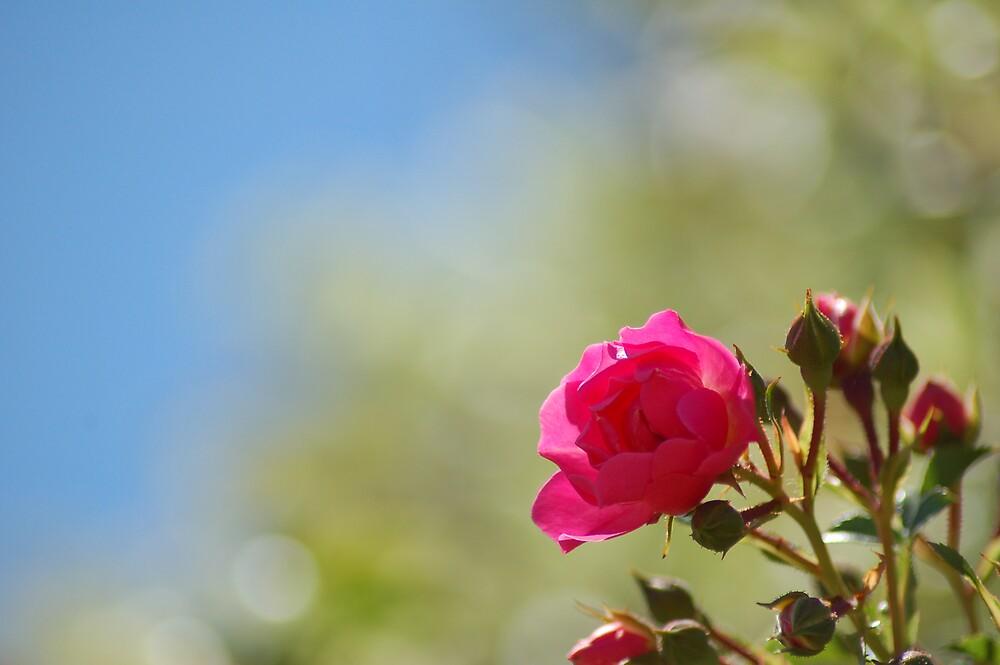 Flower by BobbyF
