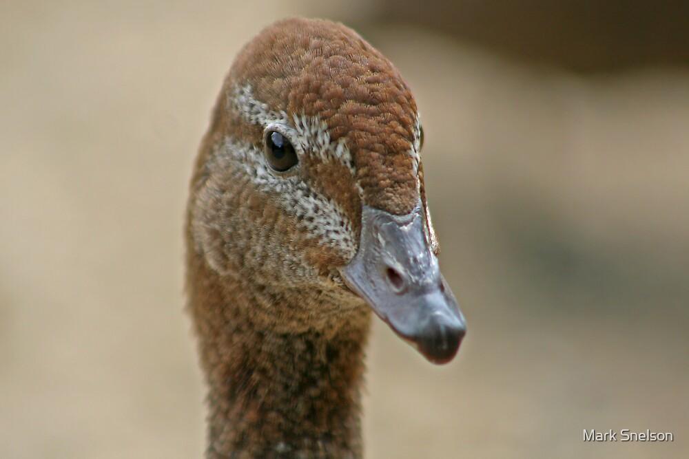 Australian Wood Duck by Mark Snelson