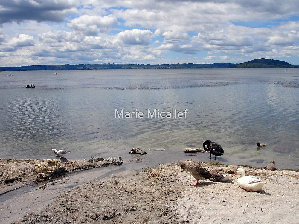 Lake Rotorua by Shutterbug
