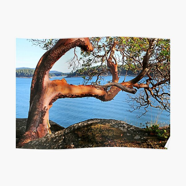 Summer and an Arbutus tree Poster
