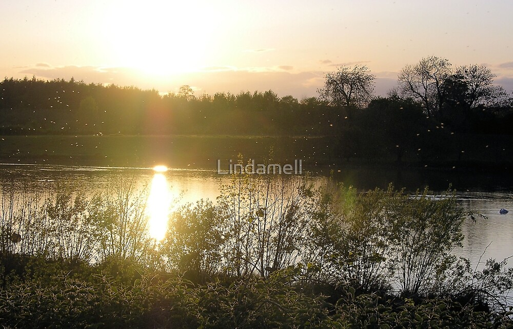 Marfield Nature Reserve by Lindamell