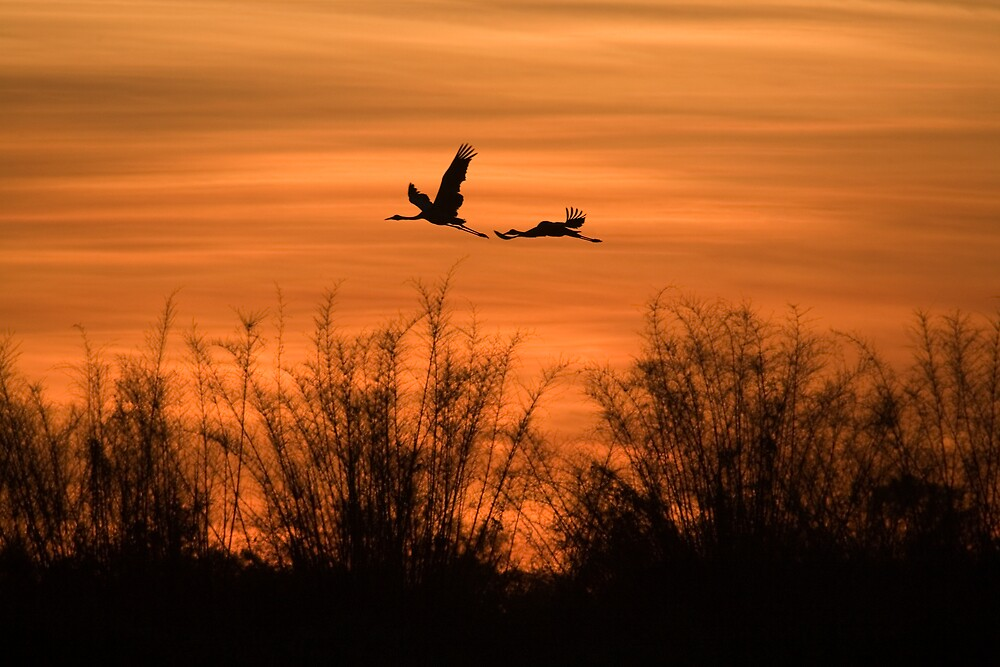 Flying home by Thomas Kress