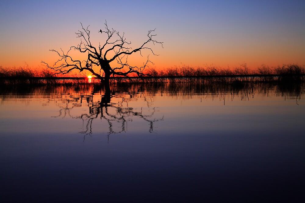 Dawn Sentinel by Thomas Kress
