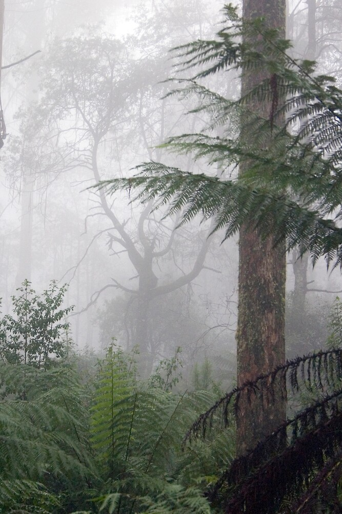 Toolangi Fog by Thomas Kress