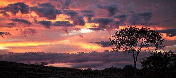 Wild Sky by Thomas Kress